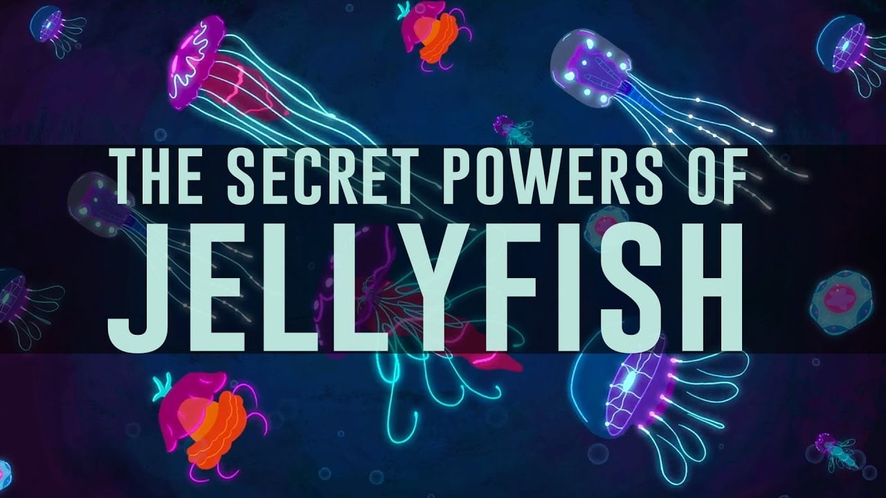 Survival 101: The Jellyfish