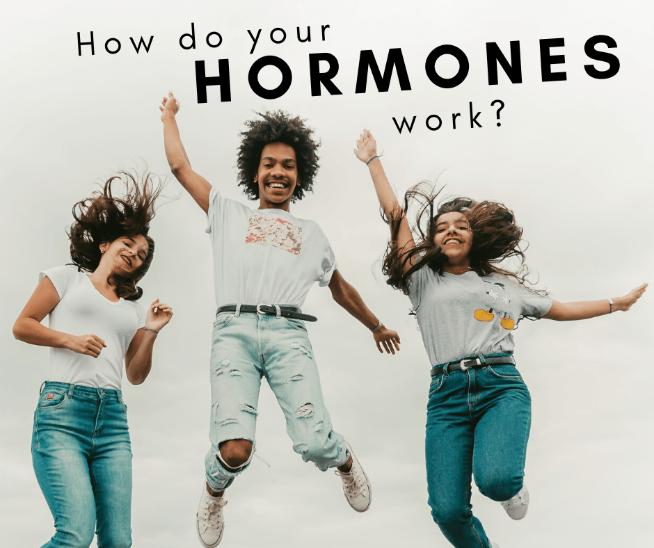 How do your hormones work?