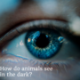 How do animals see in the dark?
